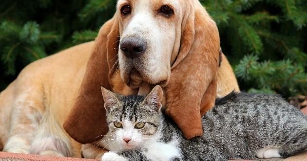 décès chat ou chien