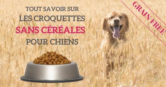 chien mange croquettes sans céréales