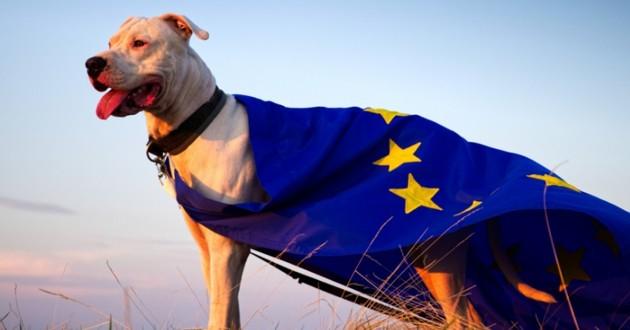 un chien qui porte un drapeau de l'union européenne