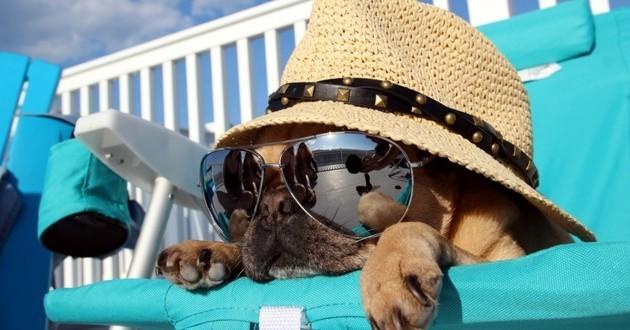 chien vacances toutourisme