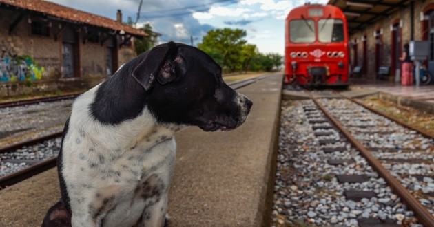 un chien qui regarde un train sur la voie ferrée