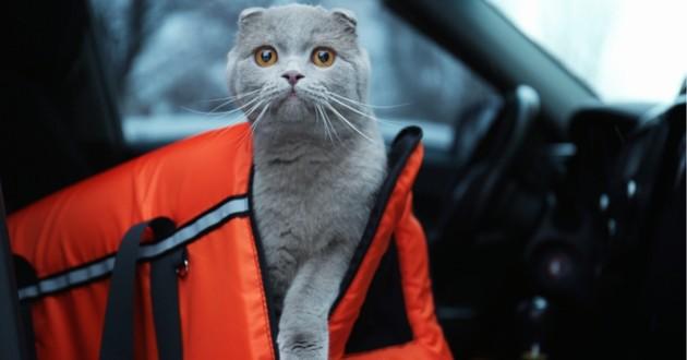 chat dans son sac de transport dans une voiture