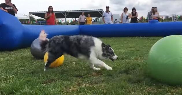treiball foot chien