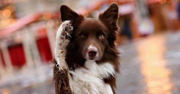 dog trick chien tour