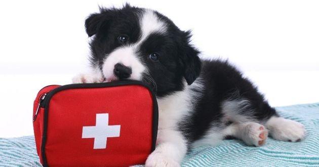chien avec une trousse de pharmacie