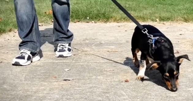 truffe de chien en 3D