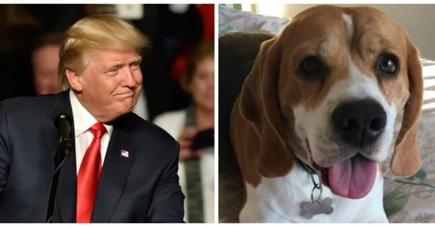 chien trump