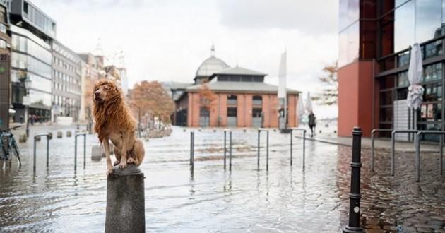 chien abandonné lion
