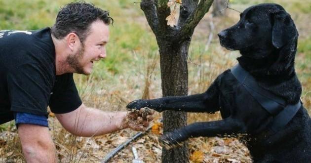 Il sauve des chiens de refuge pour en faire des chercheurs de truffes