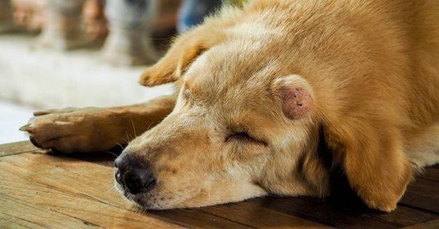 comment faire face au cancer de son chien