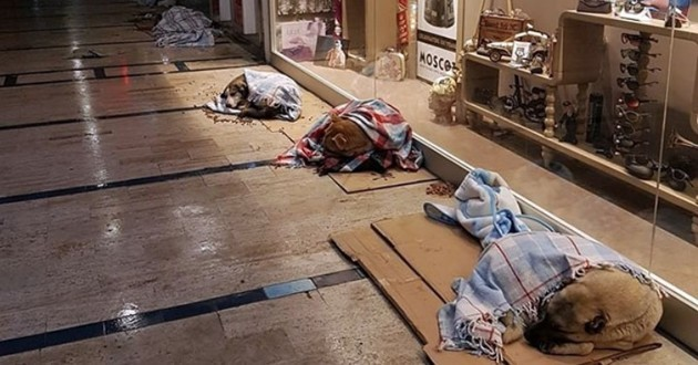 chiens protégés du froid grâce aux magasins