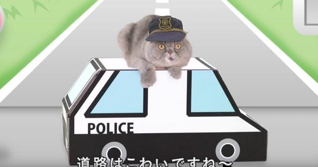chat sur une fausse voiture