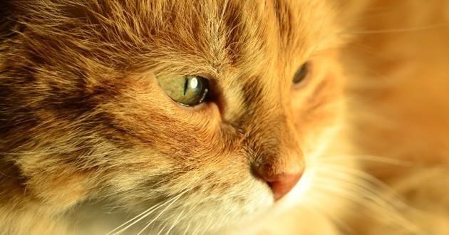 typhus chat parvovirose