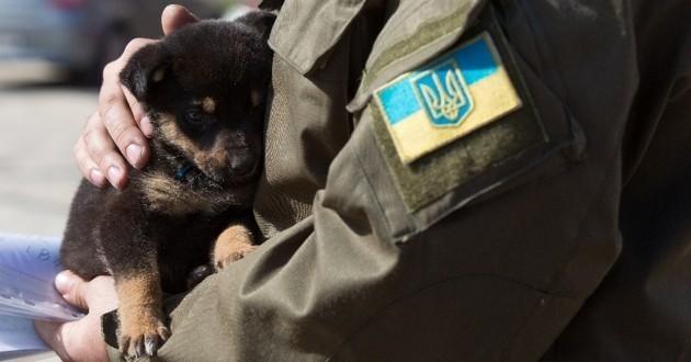 En pleine guerre, les soldats ukrainiens retrouvent le moral grâce aux chiens et chats