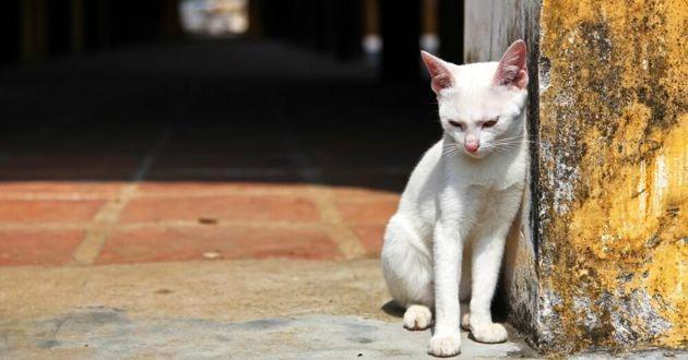 un chat errant blanc