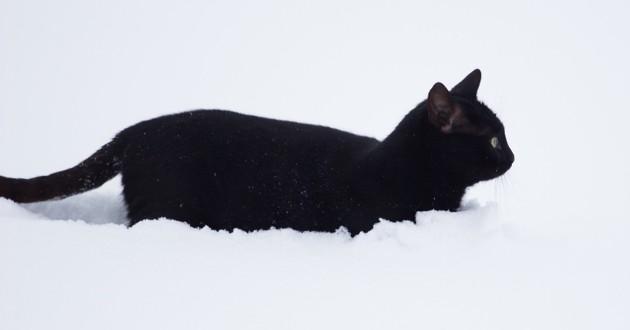 chat noir neige