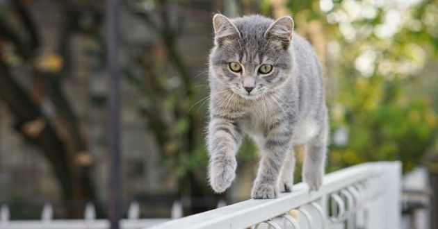 un chat qui sort