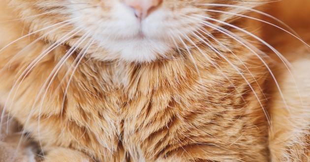 chat roux