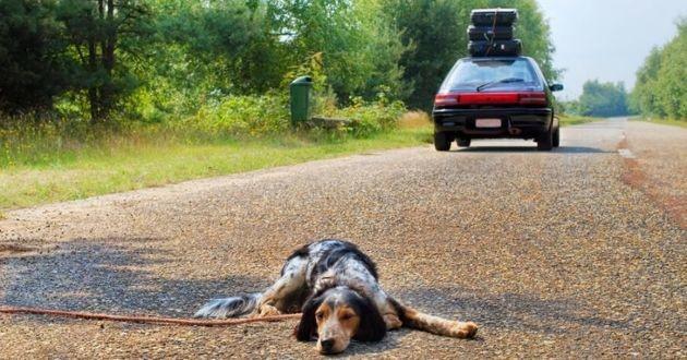 un chien abandonné