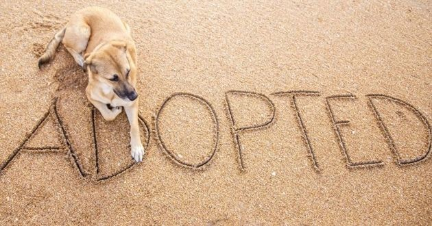 un chien adopté