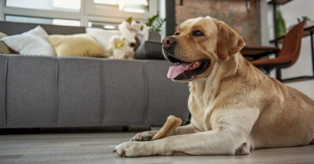 un chien avec un os