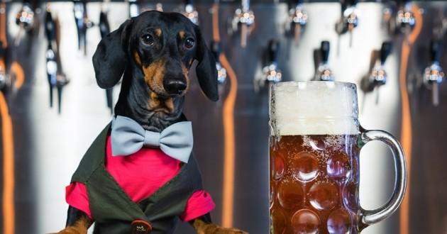 chien biere