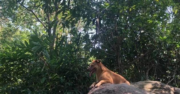 un chien dans la jungle