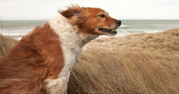 un chien dans le vent