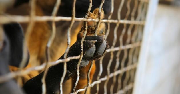 chien en cage