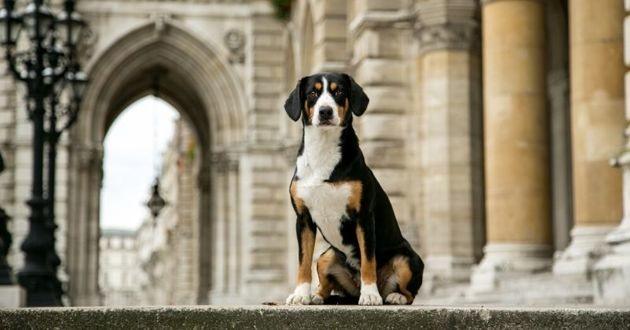 un chien assis en ville