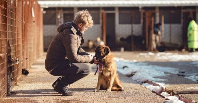 chien errant avec un homme qui l'aide