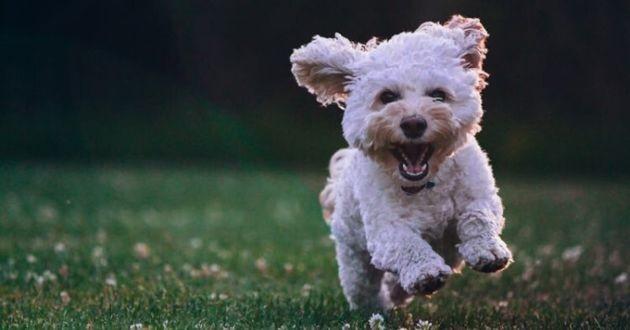 un chien heureux qui court