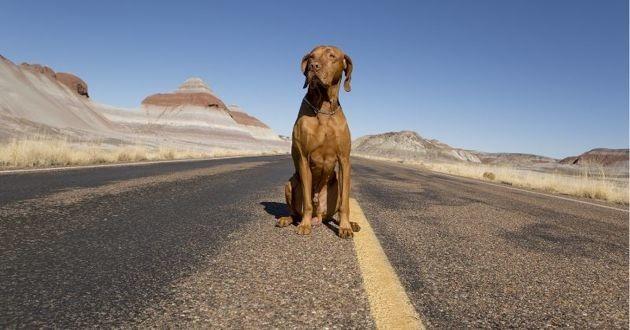 grand chien assis sur la route