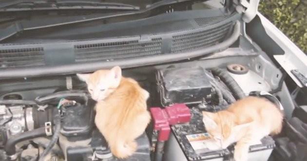Un geste simple qui sauve des vies de chats