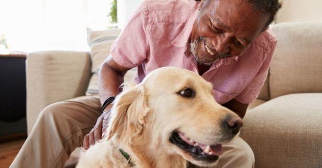 un propriétaire et son chien