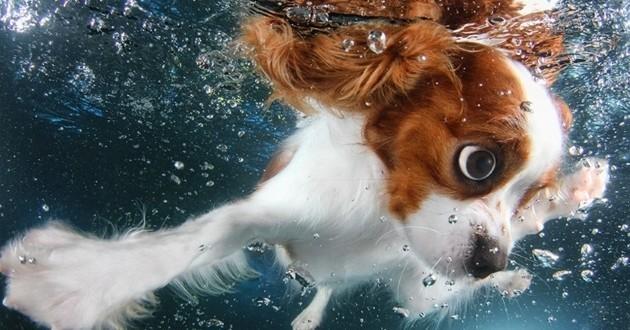 Des chiots sous l'eau