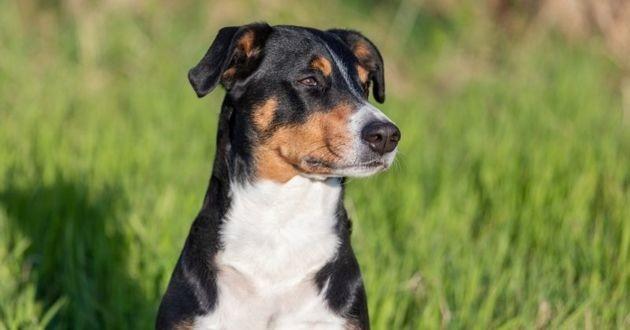 une chienne dans un champ