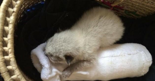 minuscule chat abandonné