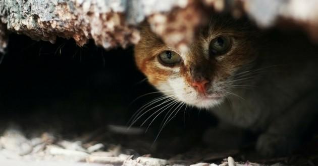 chat incendie maison