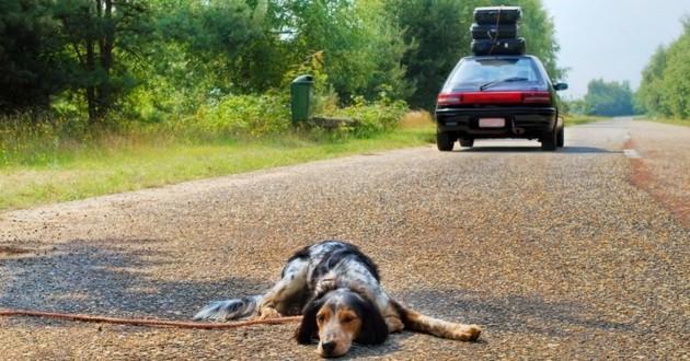 vacances abandon chien
