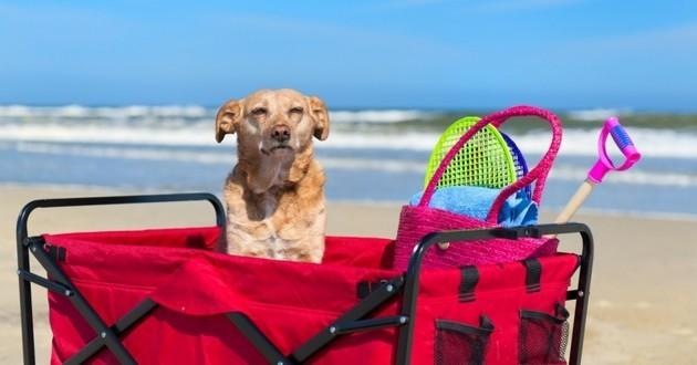 vacances voyage avec son chien