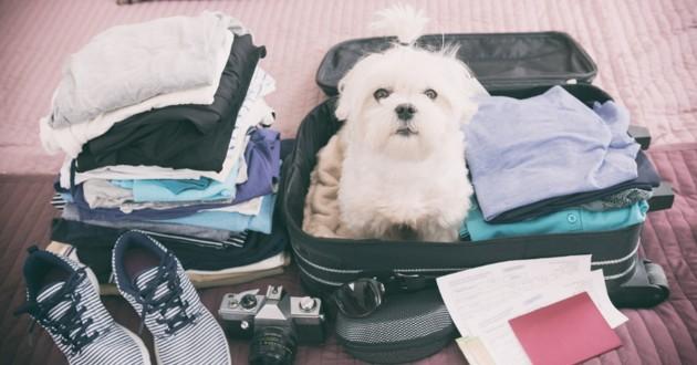 chien installé dans une valise