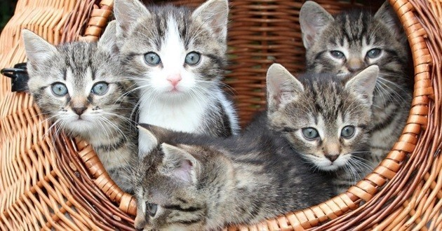 chatons dans un panier