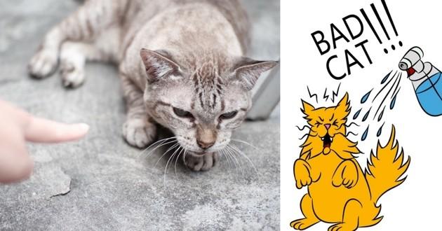chat punition vaporisateur eau