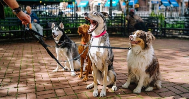 chiens qui attendent friandise