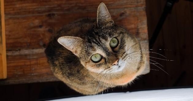 chat abandonné vengeance