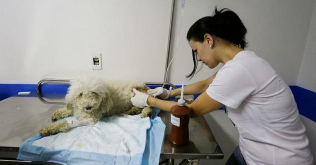 euthanasie d'un chien