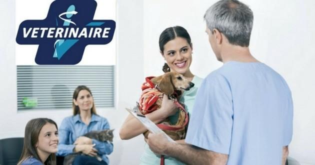 relation vétérinaire technologies