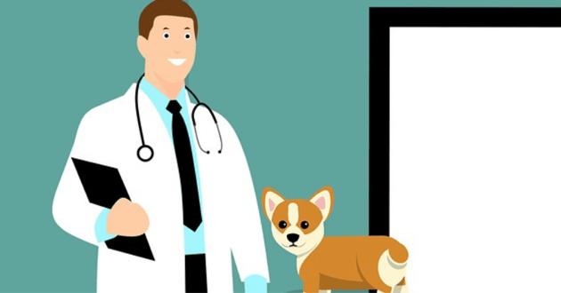 Soins vétérinaires : Nantes et Lille, les villes les moins chères pour faire soigner son animal