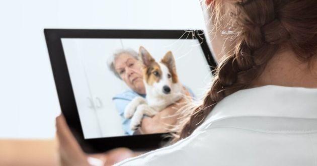 téléconsultation vétérinaire